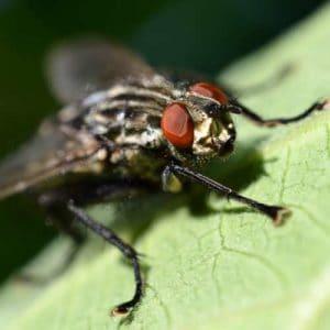 Se débarrasser de mouches