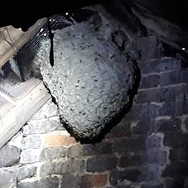 Extermination nid de guêpes Liévin