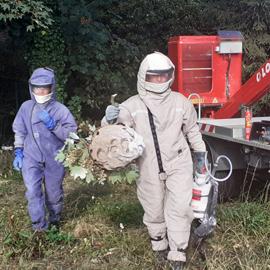 Destruction nid de frelons asiatiques 59
